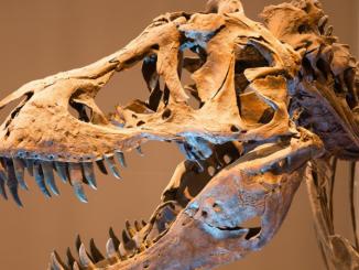 Photographie du squelette d'un dinosaure, muséum des sciences naturelles de Bruxelles