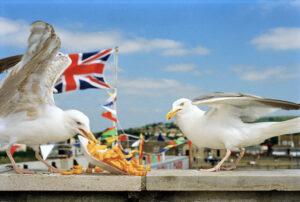 Dorset, England, GB, 1996 © Martin Parr/Magnum Photos